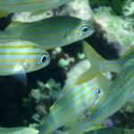 kleine Fische ganz nahe