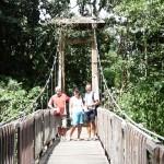 Brücke zum Regenwald