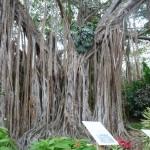 Urwaldriese im botanischen Garten