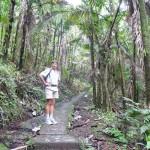 Touristenpfad durch den Regenwald
