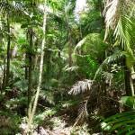 ein Regenwald voller Palmen und Farne