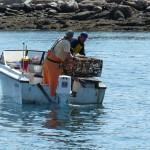 Lobsterfischer bei der Arbeit