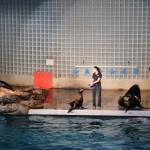 Seelöwenvorführung