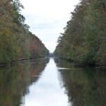 im Dismal Swamp