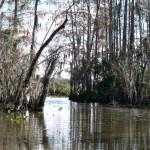 auch das sind die Everglades