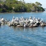 auch Pelikane kuscheln
