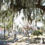Hexenhaar am Friedhof