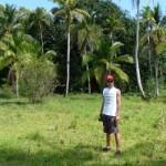 auf der Insel