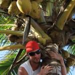 Pirat auf der Palme