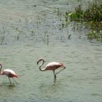 auch Flamingos gibt es hier