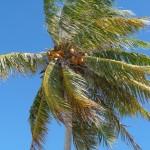 eine Kokosnuss für dich