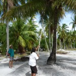 Kokosnuss pflücken