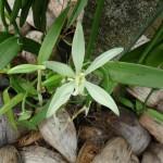 Orchideen für die Braut