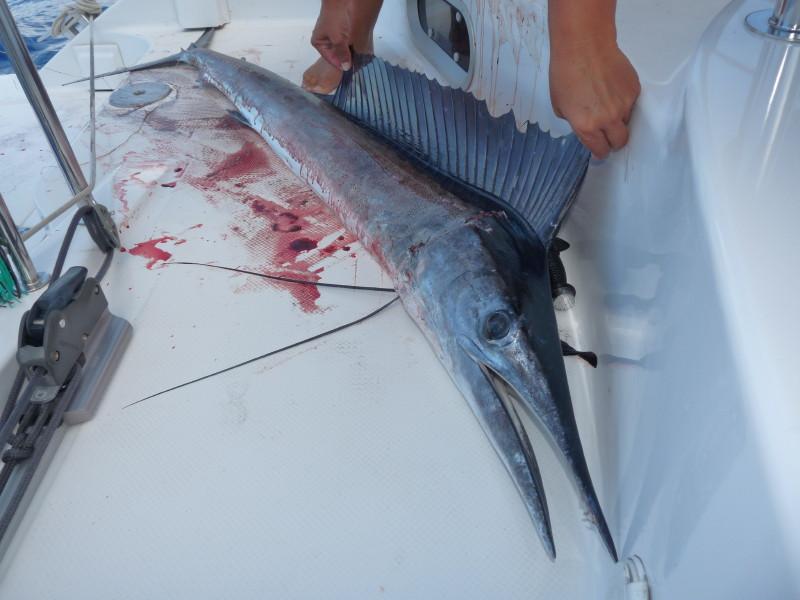 Aitutaki @ cul8r unterwegs