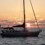Tucan im Sonnenuntergang