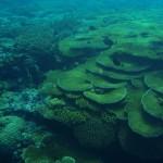 auch unter Wasser sehenswert