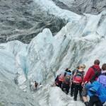 Almauftrieb am Franz Josef Gletscher