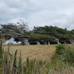 der Wind als Bildhauer