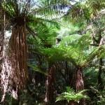 Urzeitpflanzen im Regenwald