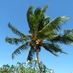 Gruß aus Samoa