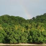 Urwaldinsel
