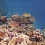 Schnorchelstopp am Riff