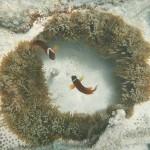 die Wächter der Anemone