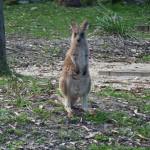 Gruß vom australischen Osterhasen