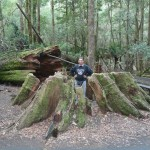 Edi in einem alten gefallenen Riesen