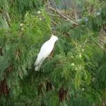 ein Kakadu vor unserem Fenster