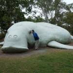 Aug in Aug mit einem Dugong