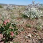 Frühling im Outback
