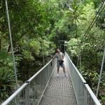 Regenwaldbrücke